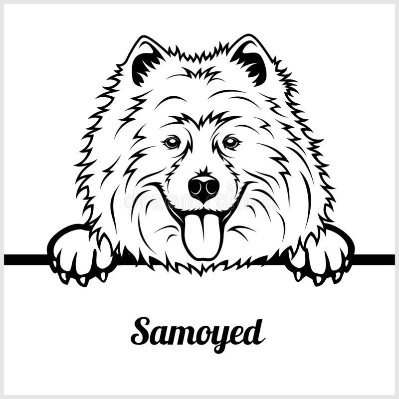 Samoyed - Peeking Dogs - - Breed Face Head Isolate