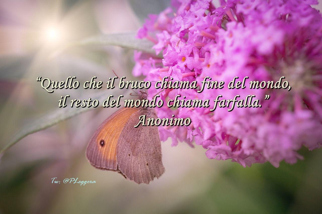 """#pensierodelgiorno""""Quello che il bruco chiama fine del mondo, il resto del mondo chiama farfalla."""" Anonimo"""