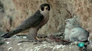 Resultado de imagen de aves esteparias