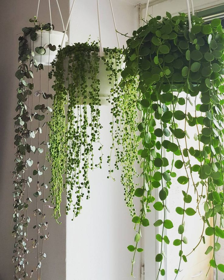 "Photo of @sylplants on Instagram: ""Plant my hanging plants instead of curtains … – Modern"
