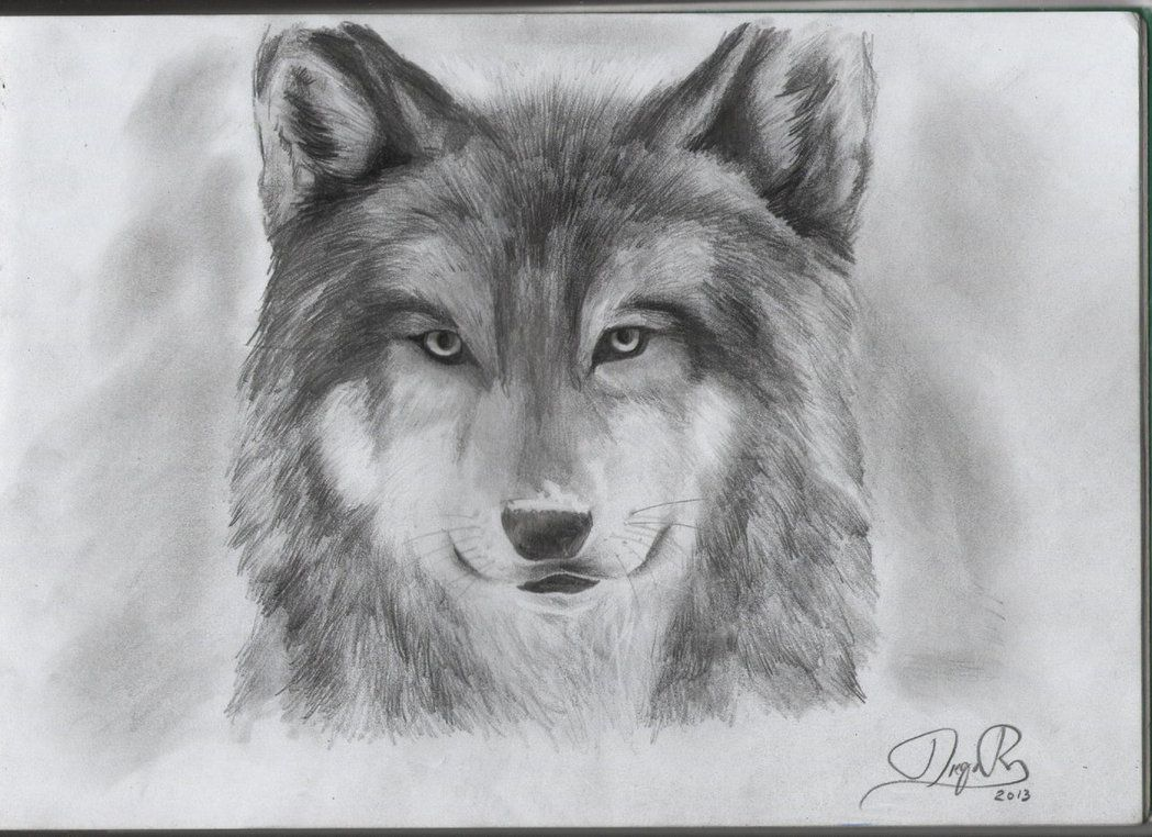 Dibujos De Animales Y Paisajes