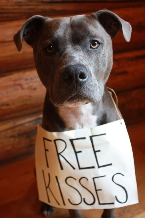 Beautiful Dog Giving Away Free Kisses Dogkissessign