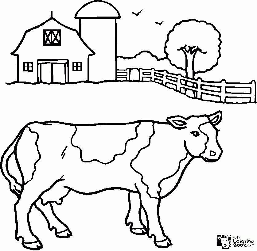 Little Calf Coloring Pages Halaman Mewarnai Gambar Hewan Lucu