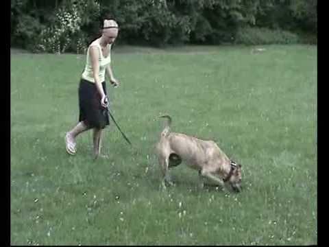Inkonsequenz In Der Mensch Hund Kommunikation Youtube Hunde