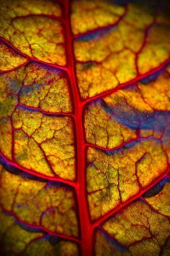 Pin By Scott Mednick On Museum Of Color Photography Nature Art Patterns In Nature Natural Forms
