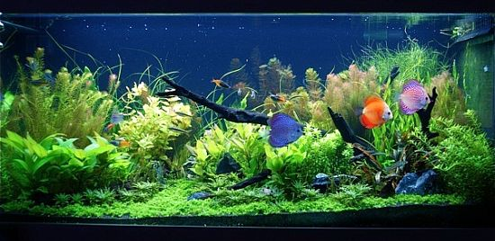 4ft Planted Tank By Jervis