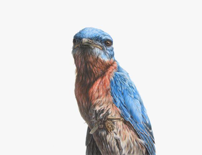 El artista con base en Brooklyn George Boorujy consigue estas obras usando exclusivamente tinta de colores. El nivel de detalle que logra es un comentario obligado al enfrentarse a cualquiera de sus creaciones, que exaltan la belleza animal, en especial la de los pájaros norteamericanos.