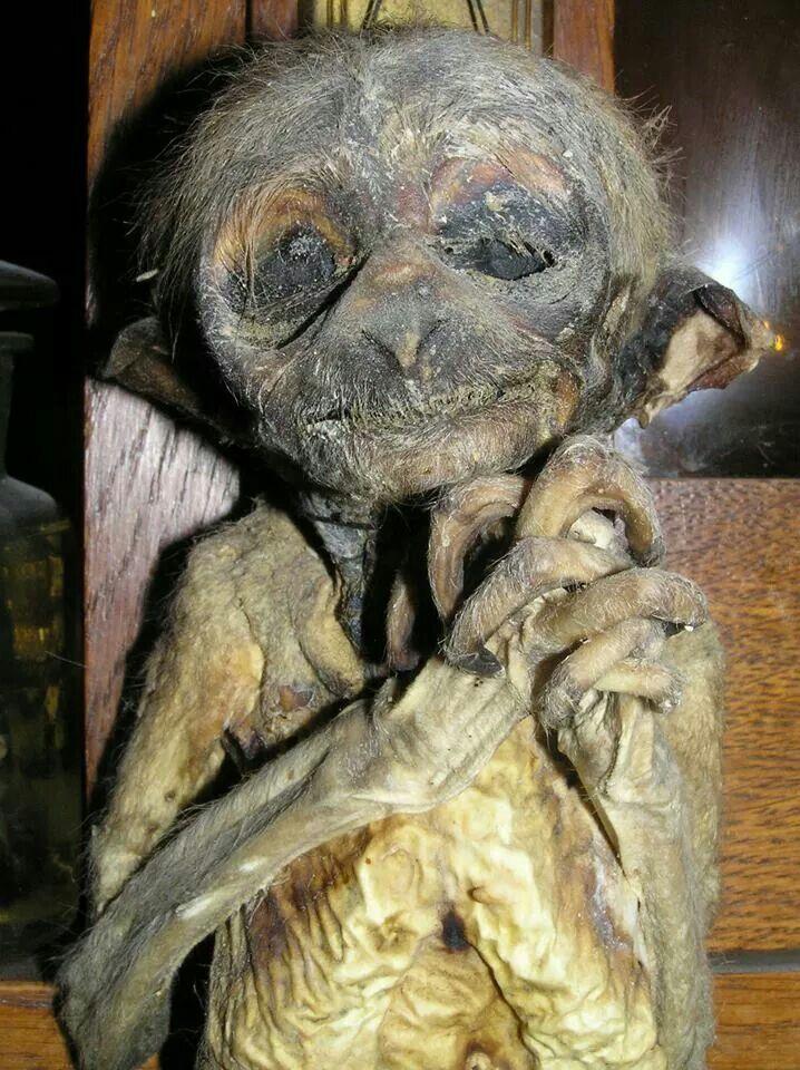 mummified monkey wtf cabinet of curiosities uncommon