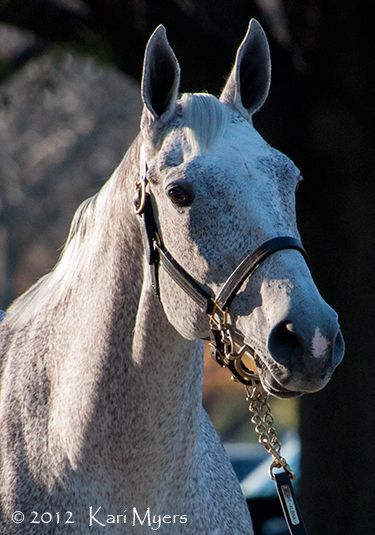 Nov 5 2012 Ponche De Leona Shown Here In Foal To Tapit