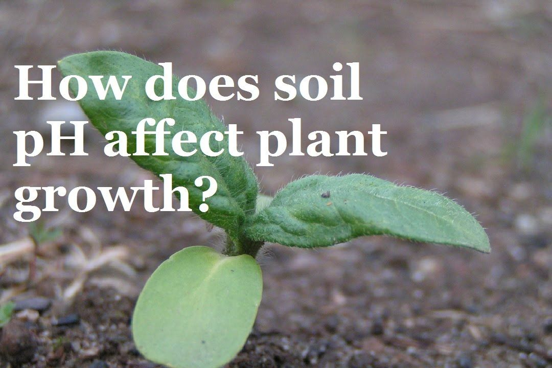 ffbff36a20684353ff63f0033c2f3545 - How Does Ph Affect Plant Growth And Gardeners Gardens