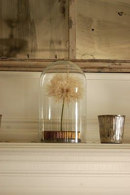 Dandelion under glass
