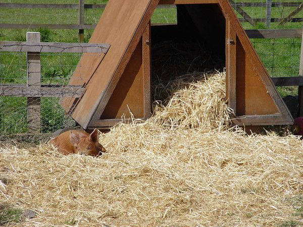 Unterstand für Schweine; Garten. | Schuppen | Pinterest | Unterstand ...