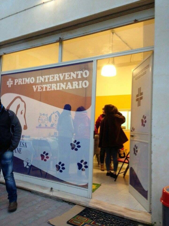 Apre Il Primo Intervento Veterinario Per Randagi Carbonia Canili Cani Veterinario