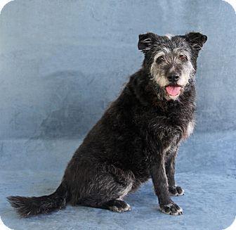 Greensboro Nc Terrier Unknown Type Medium Mix Meet Brenda A Dog For Adoption Http Www Adoptapet Com Pet 12723451 Greensboro North Carolina Terri Hunde
