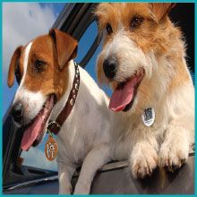 Get 30 Off Pethub Ids When You Use Code Kissme Www Pethub Com Shop Losing A Pet Pets Cool Pets