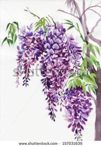 Original Watercolor Painting Of Beautiful Wisteria Branches In Blossom By Veronika Surovtseva Via Shutterstock Flower Art Flower Painting Watercolor Flowers