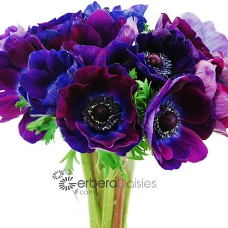 Anemone Wholesale Flowers Anemone Flower Artificial Flowers