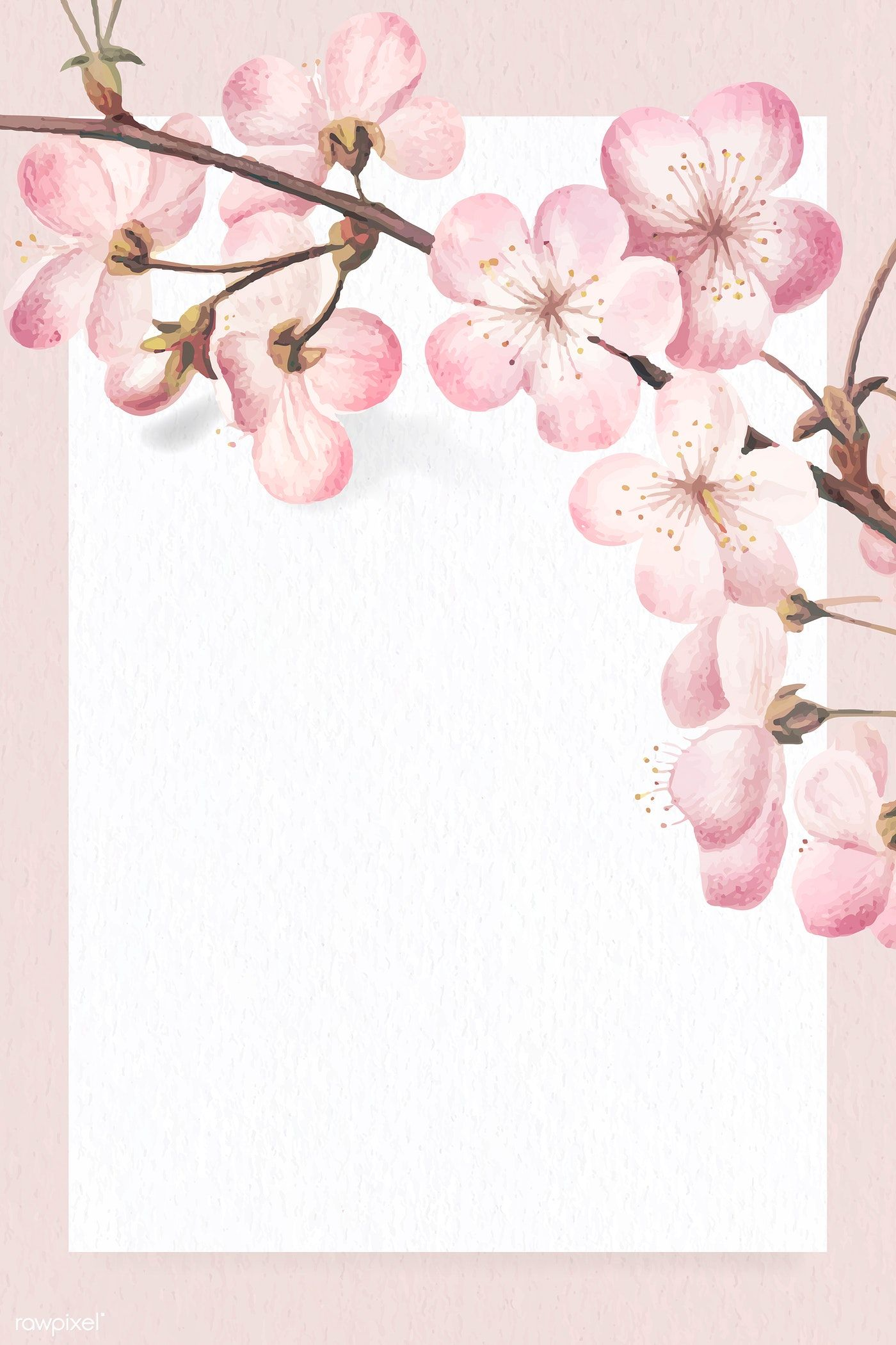 Rectangle Cherry Blossom Frame Vector Free Image By Rawpixel Com Wan Cherryblossom Pink Cherry Blossom Vector Flower Illustration Pink Flower Painting