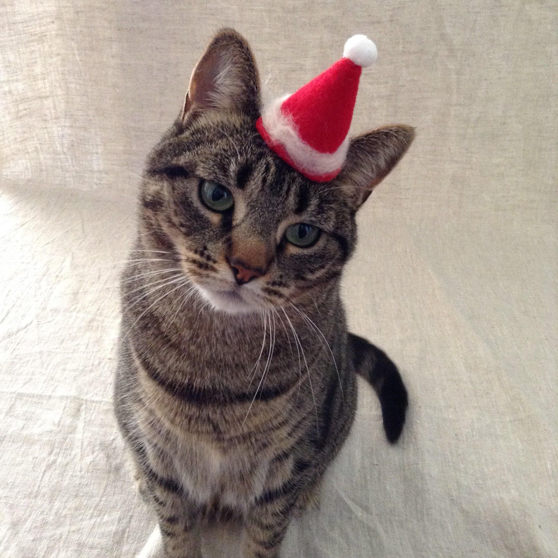 Santa Claws Hat For Kittens Kittens Pet Costumes Santa Claws