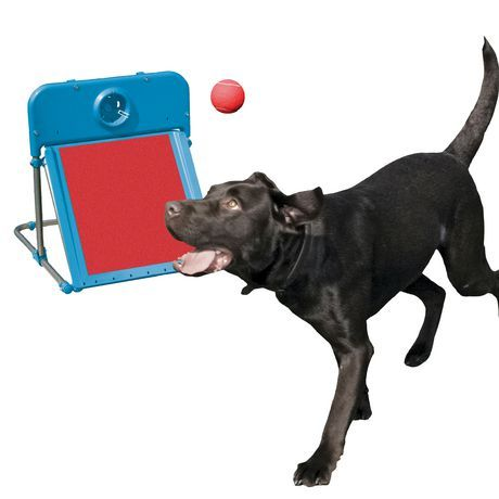 Rosewood Pet Agility Flyball For Dogs in 2019 | Products