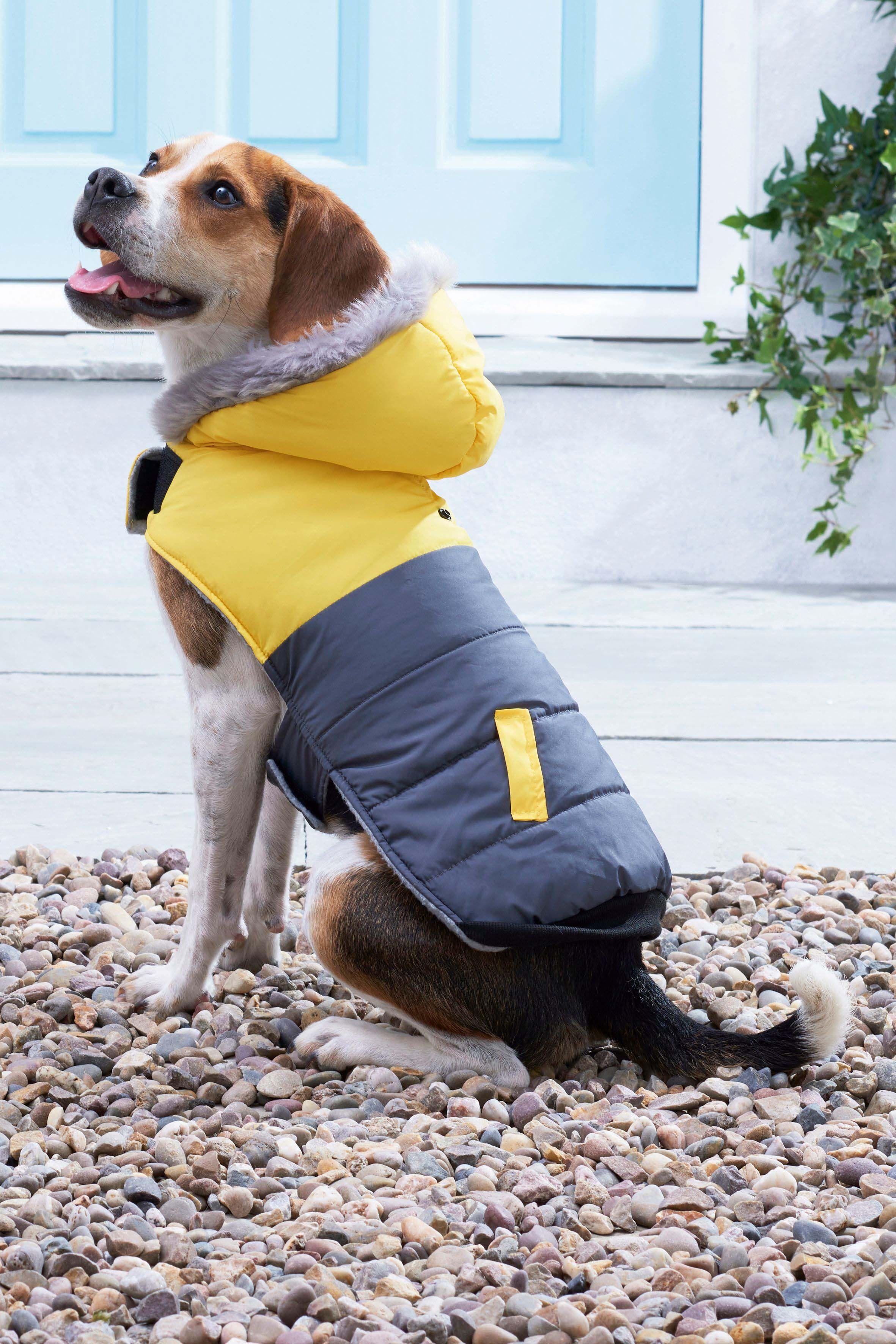 Next Padded Dog Coat Yellow Dog Coats Dogs Dog Houses