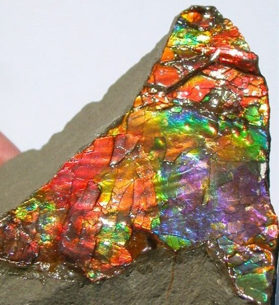 Ammolite with all colors of the rainbow - rare - Click image to find more Science & Nature Pinterest pins