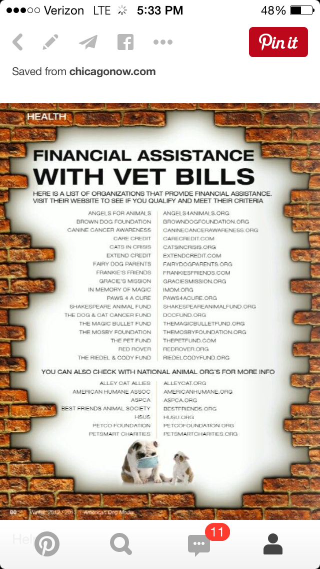 Pin By H Oldham On Pets Canine Cancer Vet Bills Pets