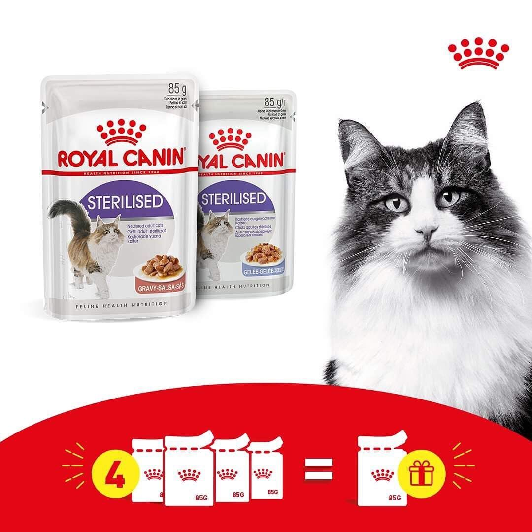 Health Nutrition Also Exists In Wet The Offer Is Still Here Grab 4 Pouches And Get Your Free Pouch Royalcan Feline Health Food Animals Health And Nutrition