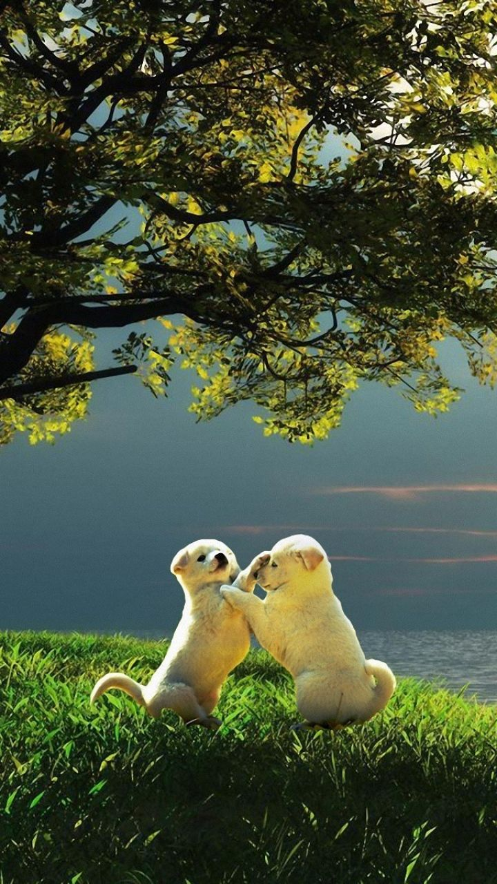 720x1280 Wallpaper Puppy Couple Sunset Nature Play Kids
