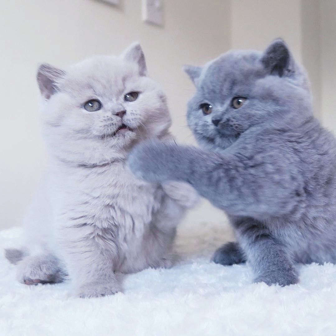 Pin by 𝓜𝓲𝔃𝓴𝓪𝔂𝓽 on ҡเττเεઽ Cats, Cute animals, Cute cats