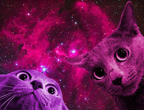 More space cats!