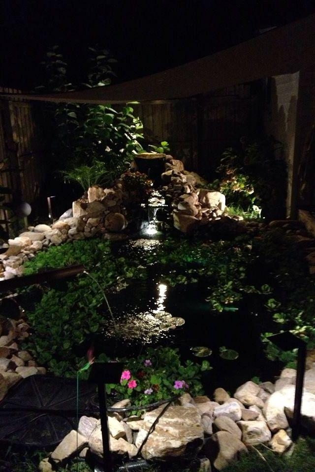 Koi pond at night