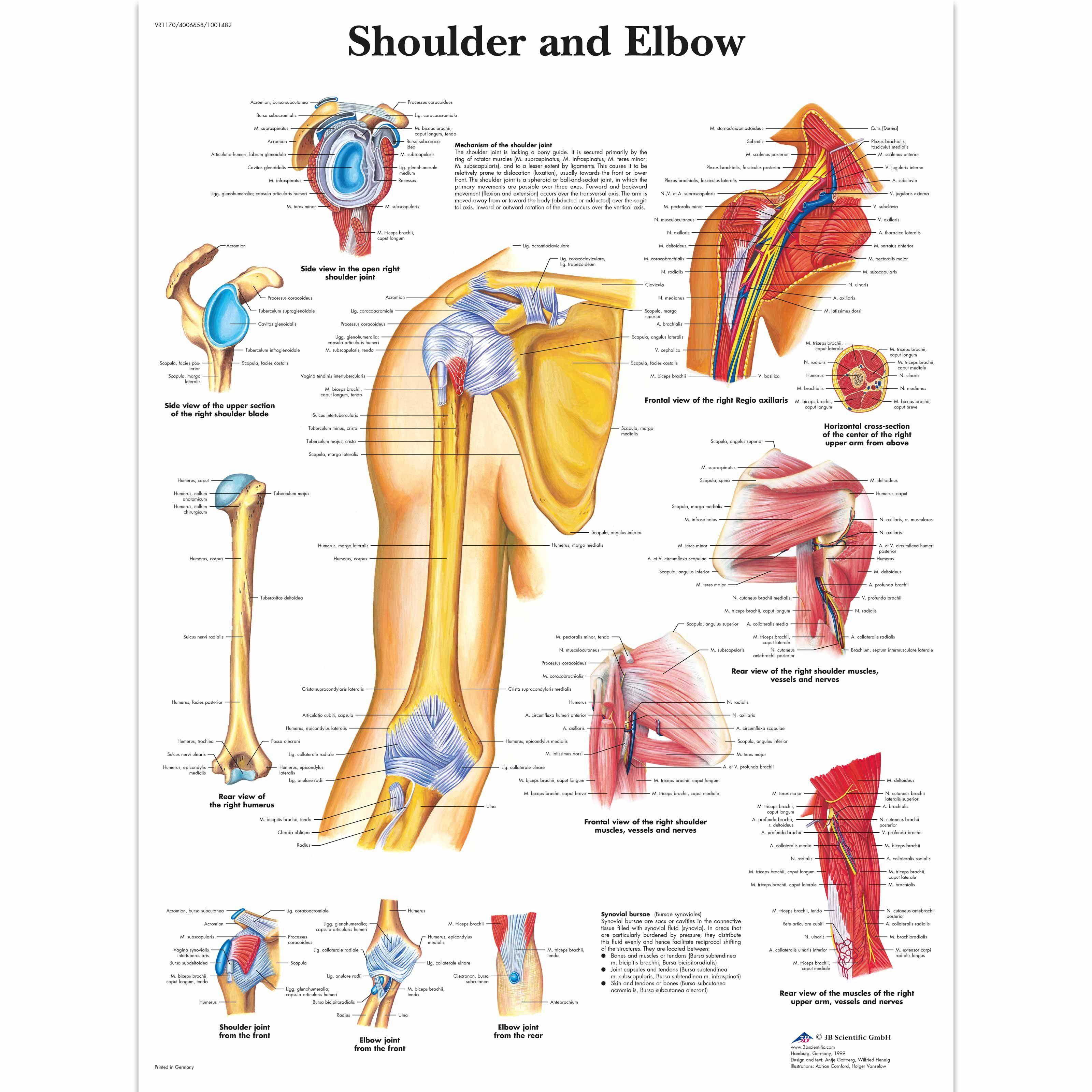 Resultado de imagen de anatomie des unterleib | anatomy | Pinterest ...