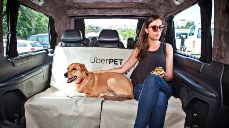 Uber Pet will solve petlovers' biggest problem Pets