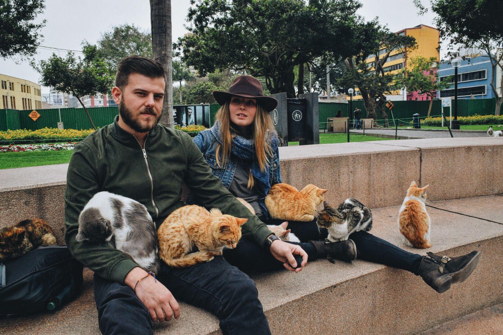 Cat naps Cat nap, Lots of cats, Beautiful park