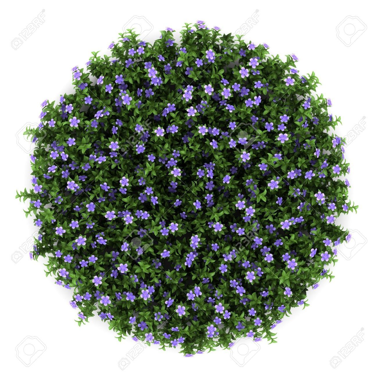 Top View Flower Png Google Search Trees Top View Shrubs For Landscaping Flowering Trees