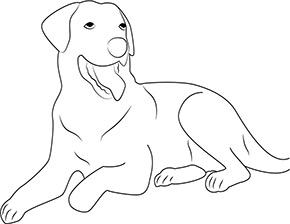 ausmalbild hund zum kostenlosen ausdrucken und ausmalen. #