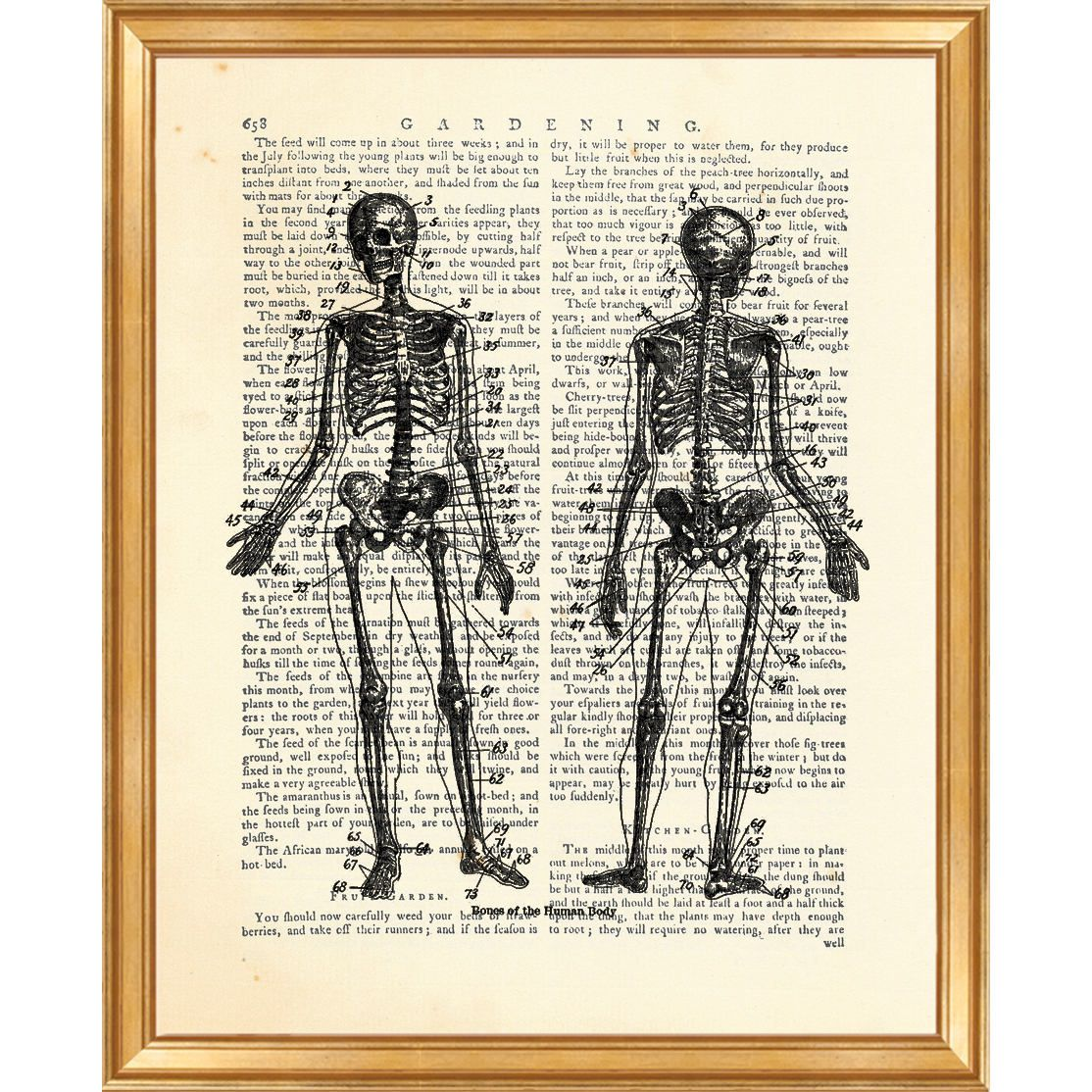 Dorm Wall Hanging, Skeleton Artwork, Anatomy Art, Chiropractic Art ...
