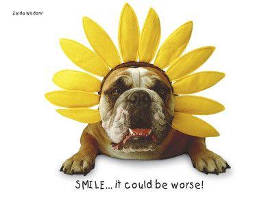 Daffodil Flower Dog Thinking of You Card
