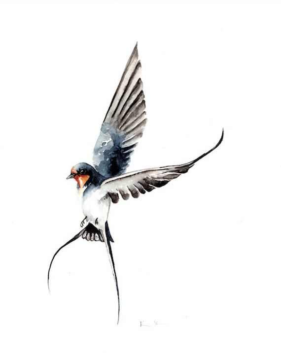 Barn Swallow Bird PRINT | Swallow bird tattoos, Swallow ...