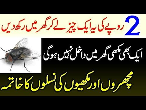 Get Rid Of HouseFly In Urdu | Makhiyan Bhagane Ka Gharelu ...