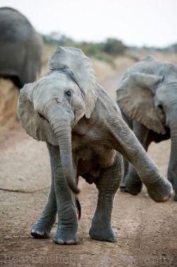 breezingby:  comfortspringstation:  Dancing Baby Elephant  ~ ♫ ~