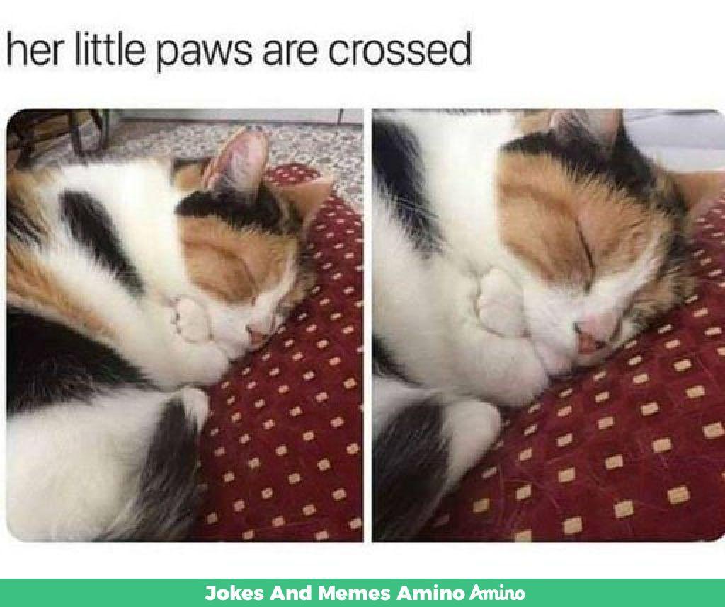 Aww Its not my cat sadly