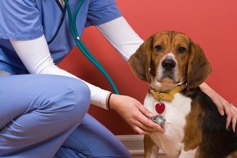 Do you know the signs of heartworm disease? Check out this interview from our board certified Cardiologist, Dr. Crystal Hariu, about the signs and specifics of the disease. http://news92fm.com/415952/heartworms-the-year-round-battle/