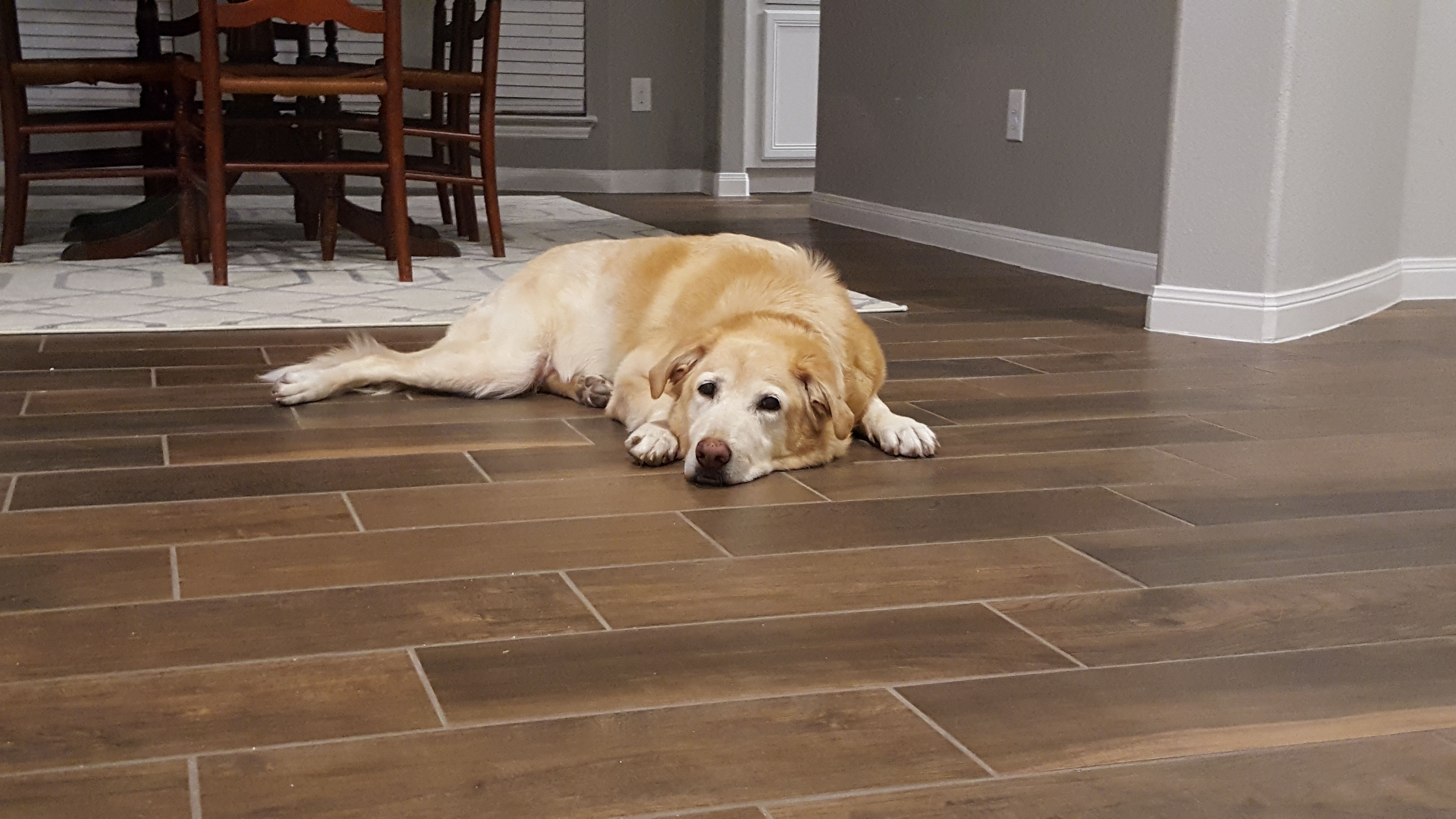 Macy Is An Adoptable Golden Retriever Searching For A Forever