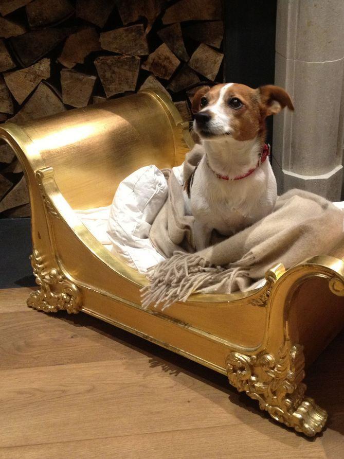 Resultado de imagen para Jack Russell Terrier ベッドドッグ