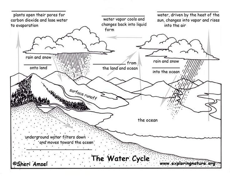 Shape Cycles In Nature Worksheet The Blank Quiz Water Cycle