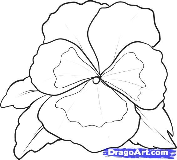 How To Draw A Pansy Step By Step Flowers Pop Culture Free Online Drawing Tutorial Added By Dawn September 13 201 Flower Drawing Pansies Flowers Drawings