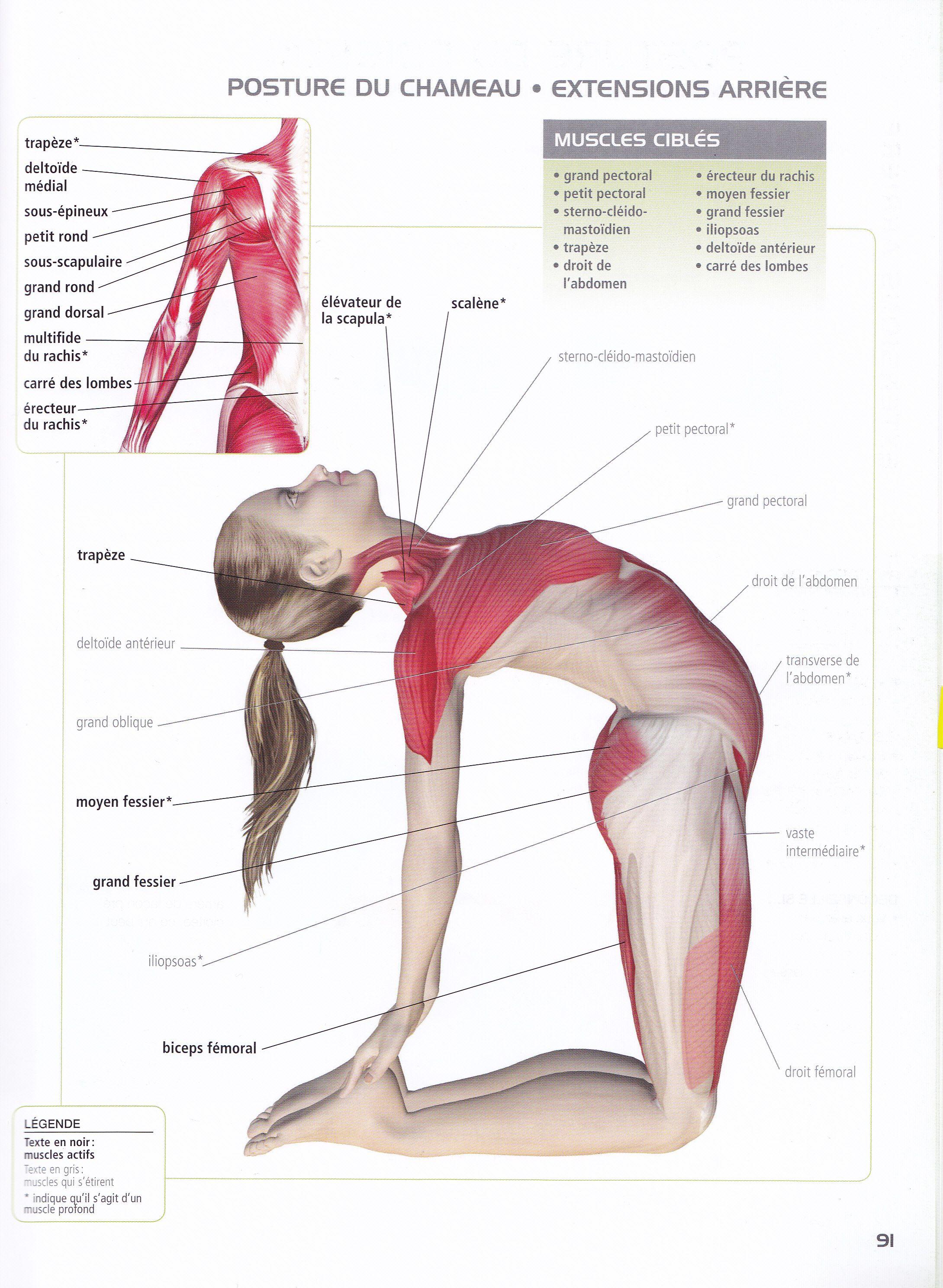 Utrasana chest, ab, quad | Gainage | Pinterest | Posturas de yoga ...