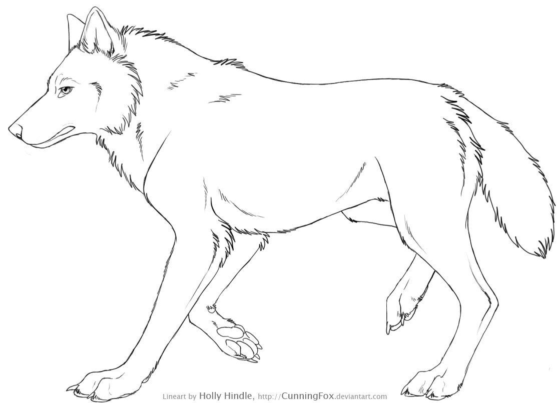Free Wolf Lineart Side View By Cunningfox On Deviantart 2 How To Draw